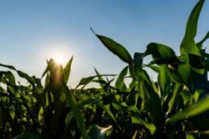 Agrar Activ, activador del metabolismo vegetal